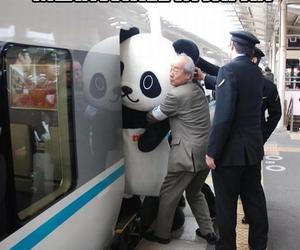 japan, kawaii, and panda image