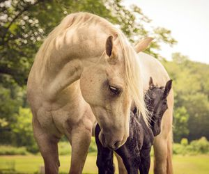 horse, foals, and photo image