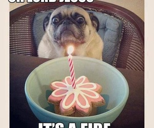 funny, dog, and fire image