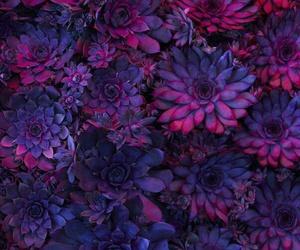 flower, violet, and wild image