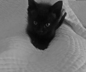 black, cat, and cat black image