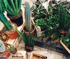 green, plants, and cactus image