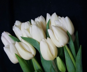 beautiful, tulips, and flowers image