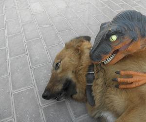 dog, funny, and dinosaur image
