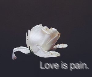 pain, love, and flowers image