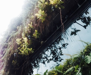 ferns, greenery, and KL image