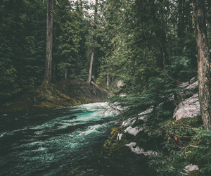 river, forest, and trees image