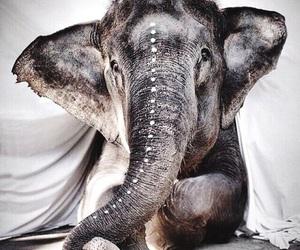 elephant, animal, and indie image