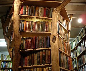 book, bookshelf, and tree image
