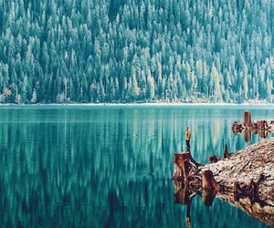 forest, lake, and travel image