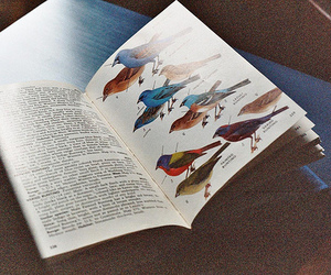 book, bird, and vintage image