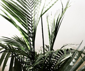 green, plant, and nature image