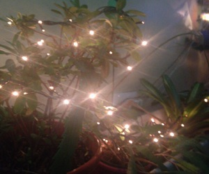 aesthetic, lights, and plants image