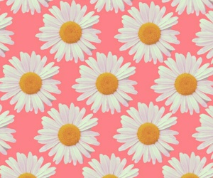 flowers, pink, and backgrounds image
