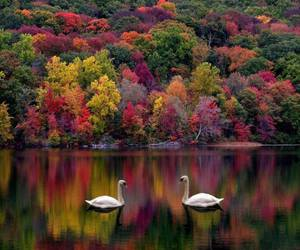 leaves, Swan, and beautifulnature image