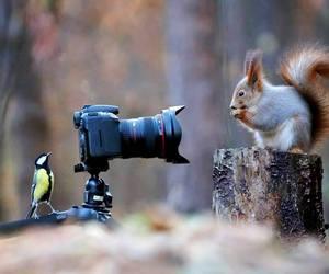 baby animals, cute animals, and birds image