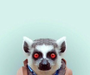 animal, lemur, and funny image