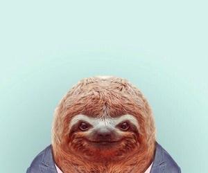 animal, sloth, and funny image