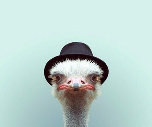 ostrich, animal, and funny image