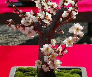 bonsai natura sakura image