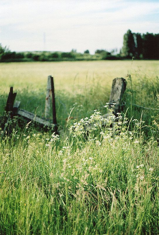green, nature, and vintage image