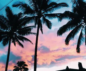 palm trees, palms, and sunset image
