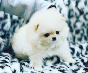 clouds, pomeranian, and small image