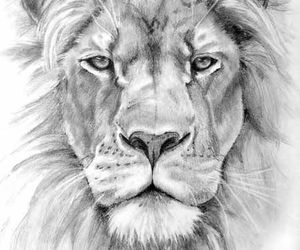 lion and drawing image