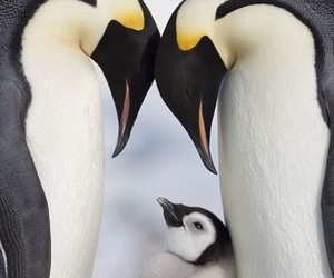 animal, pinguin, and love image