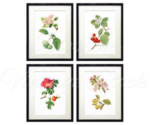 blossom, floral set, and botanical print set image