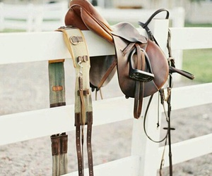 horse, bridle, and riding image