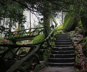 bridge, Dream, and jungle image