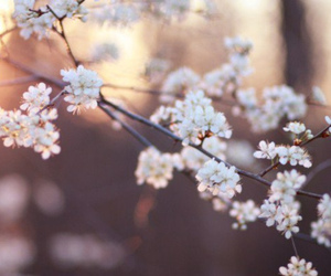 flowers, blossom, and photography image