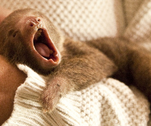 sloth, cute, and baby image