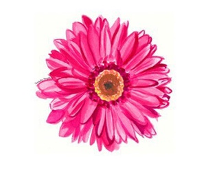 flower, pink, and overlays image