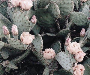 cactus, flowers, and green image