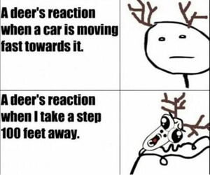 funny, deer, and awesome image