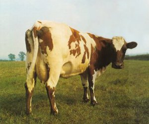 Pink Floyd, atom heart mother, and cow image