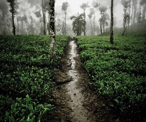 beautiful, path, and tea image