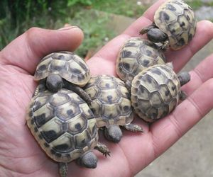 turtles, cute pictures, and baby turtles image