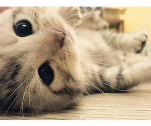 cute and kitty image