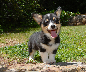 puppy, cute, and dog image