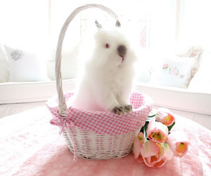 bunny, rabbits, and spring image