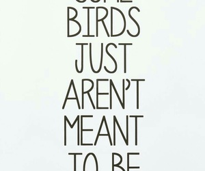 cool, phrase, and quotes image