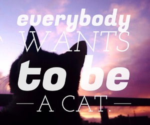 cat, easel, and weheartit image