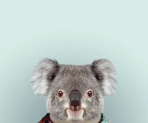 Koala, animal, and wallpaper image