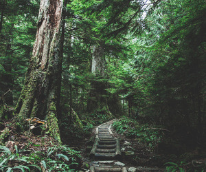green, places, and inspiration image