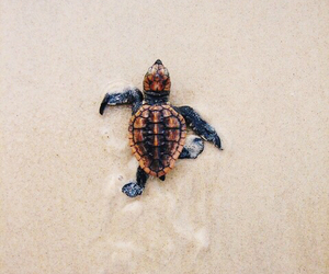 beach, turtle, and animal image