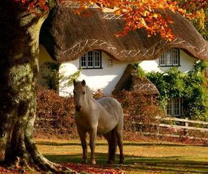 autumn, horse, and fall image