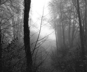 forest, tree, and mist image